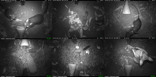 Tiwi mammals