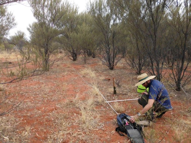 Measuring fuel loads in central Australian mulga.