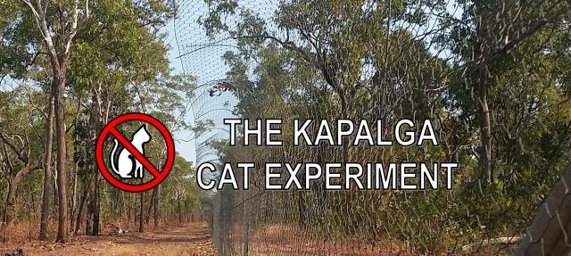 Kapalga Cat Experiment banner
